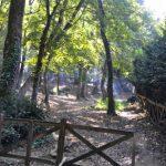 Wälder in Istanbul