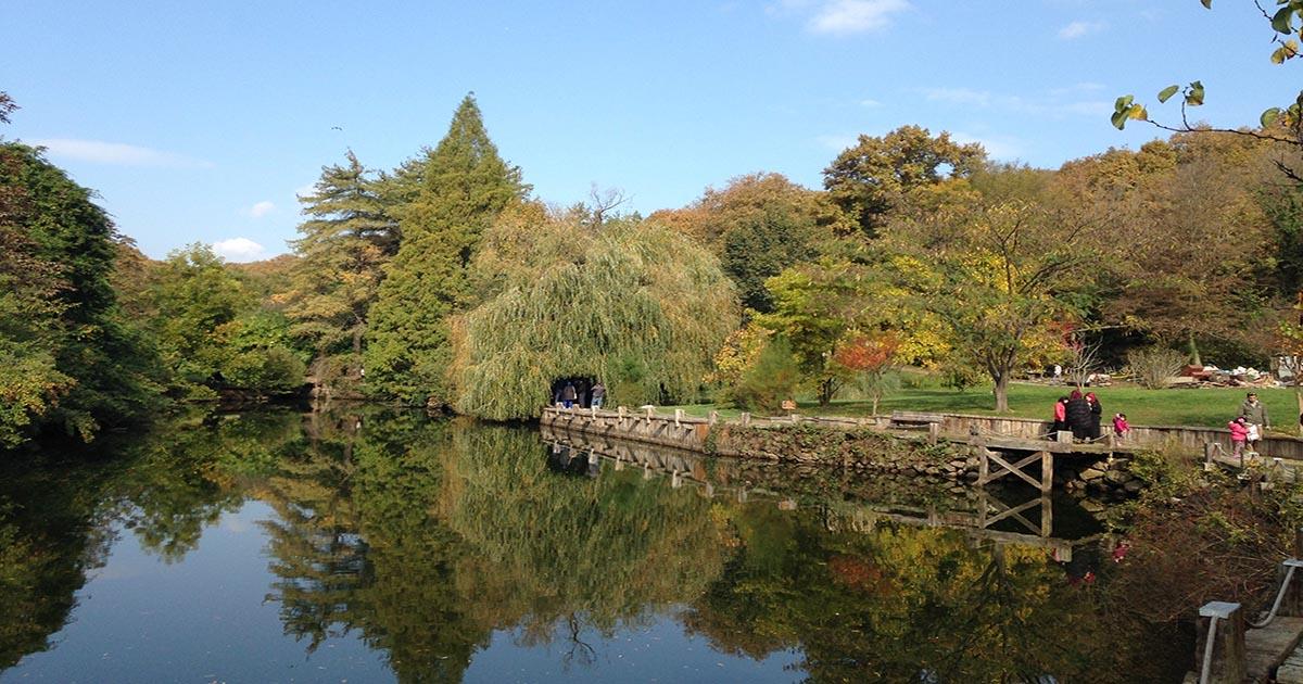 Arboretum Natural Park in Istanbul