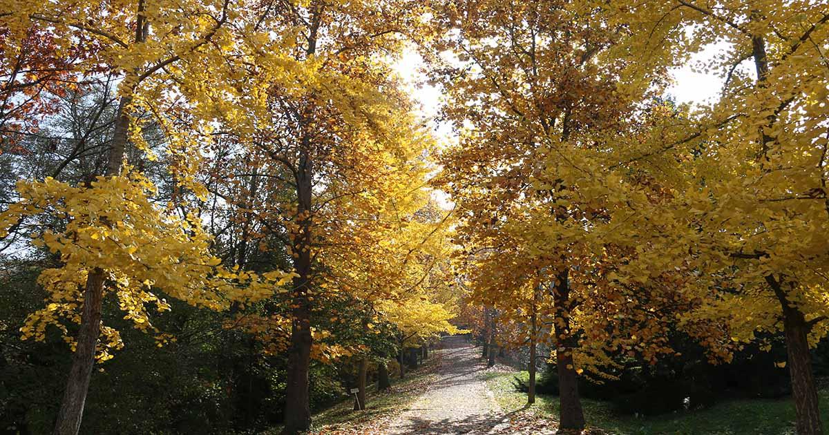 Goztepe Nature Park in Istanbul in Turkey