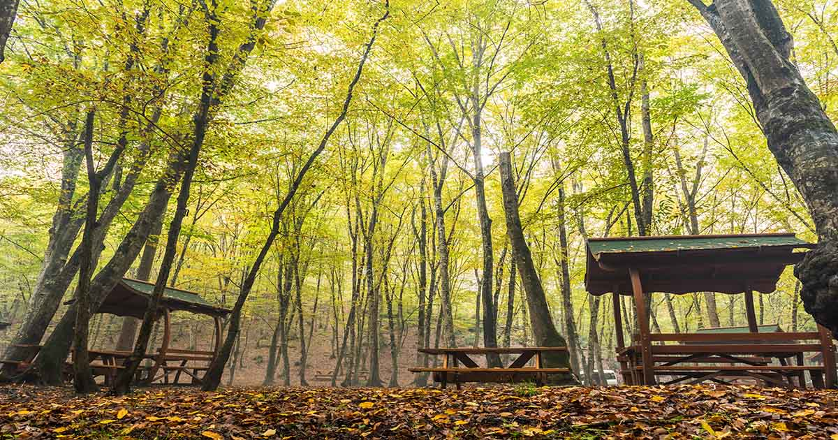 belgrad forest nature park in istanbul
